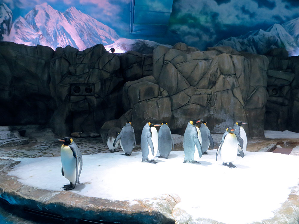 antarctique ocean park