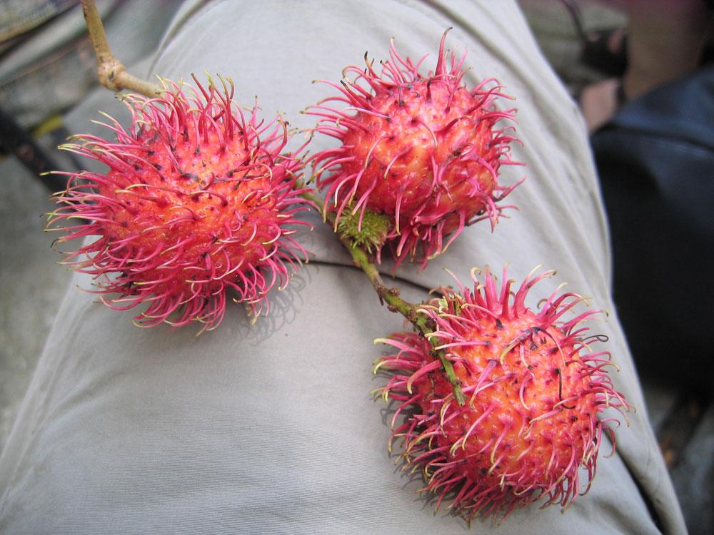 Lychees en Asie