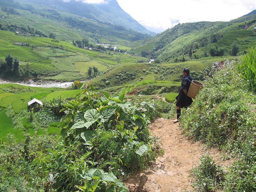 Hmong au Vietnam