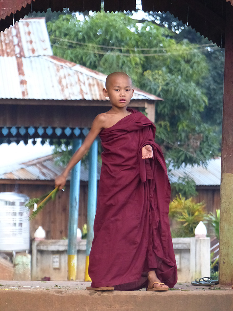 Jedi birman