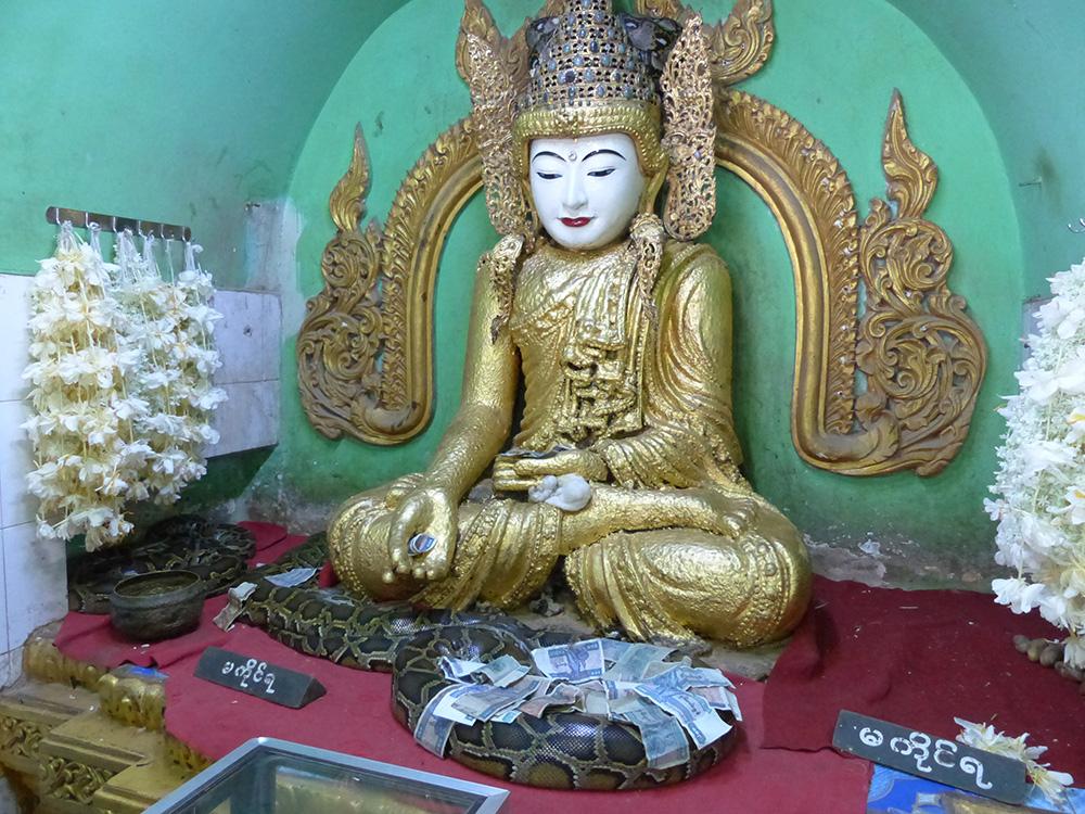Temple des pythons