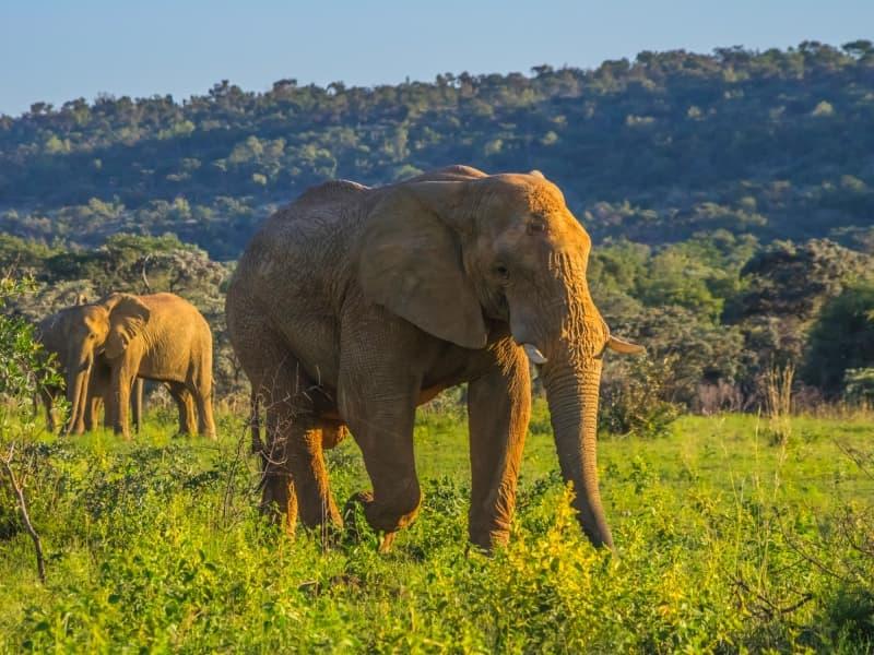 thumbnail_Afrique du Sud Safari