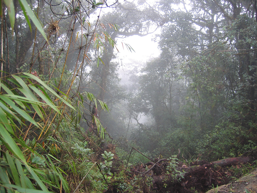 Jungle en Malaisie
