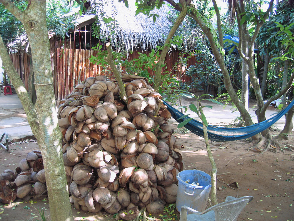 Noix de coco et hamac