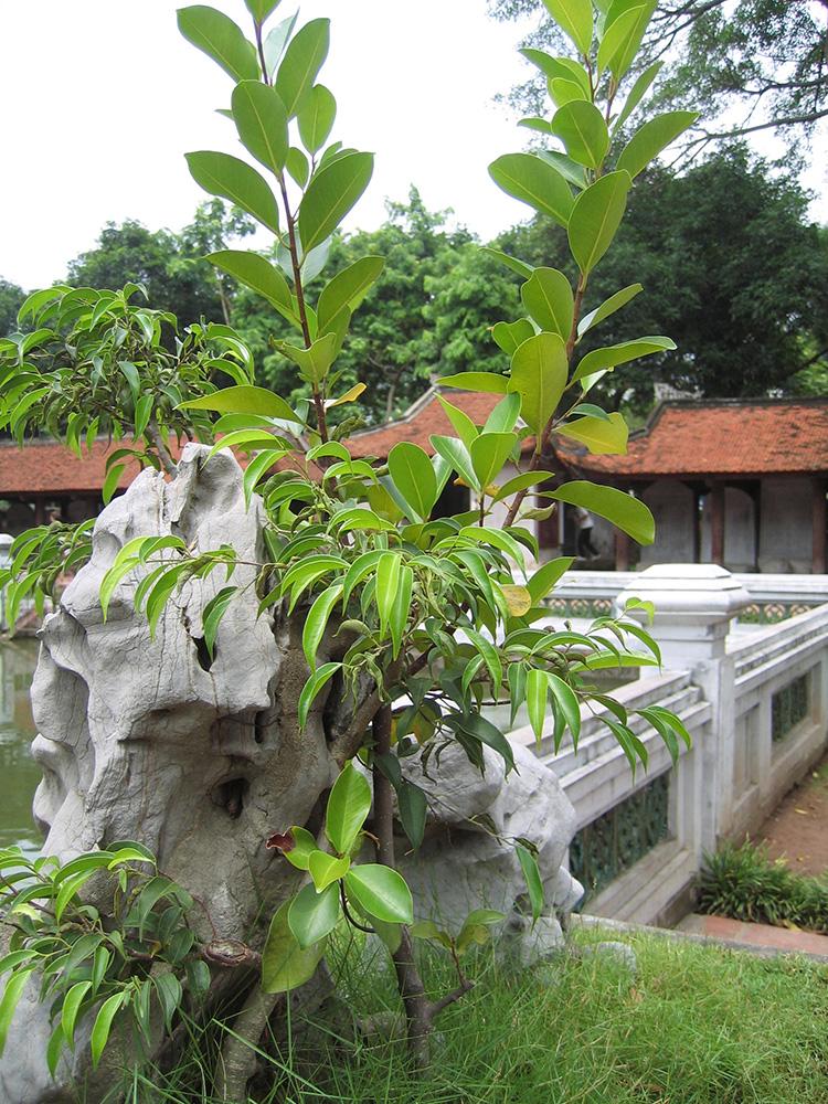 Temple au Vietnam