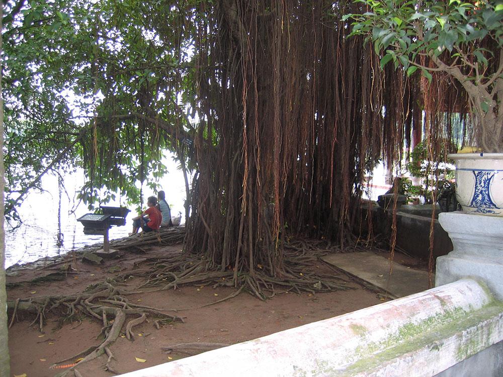 Banian Vietnam