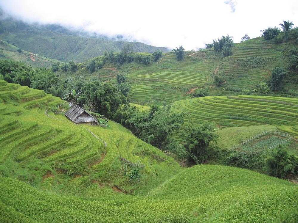Les rizières de Sapa au Vietnam