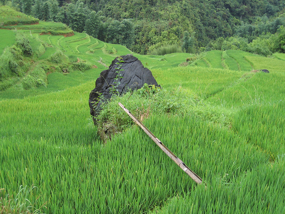 Bambou sur rocher