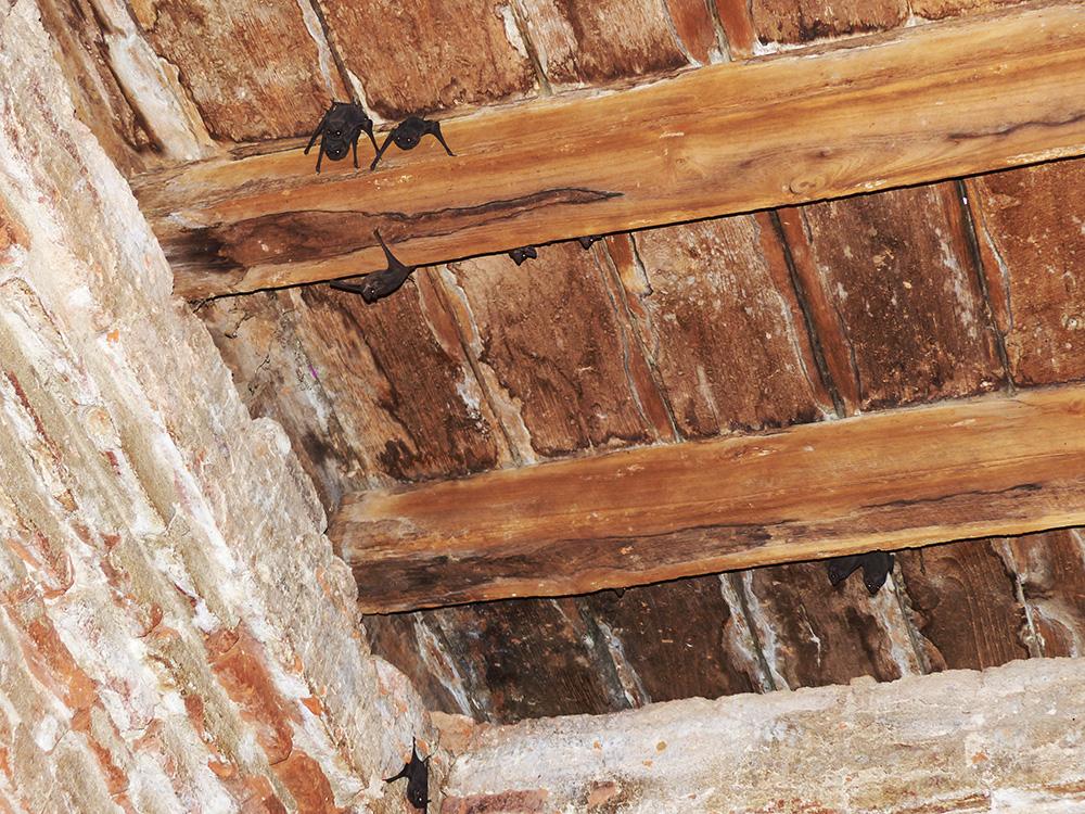 Chauves-souris dans les souterrains