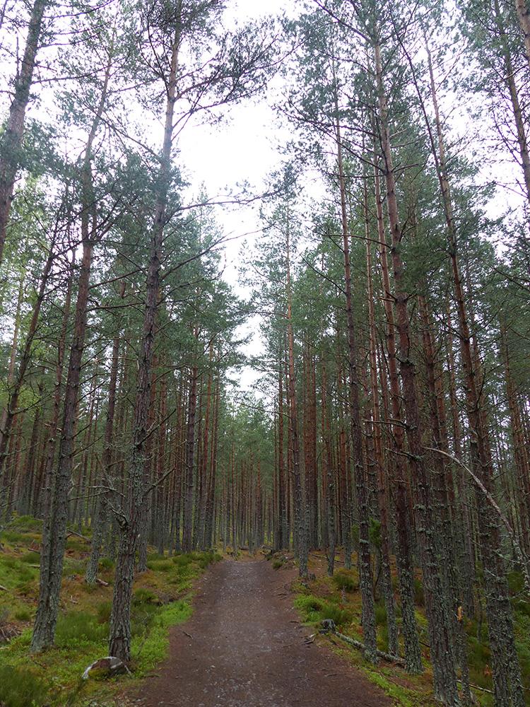 Forêt ancienne