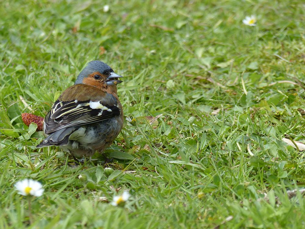 Oiseau en Ecosse