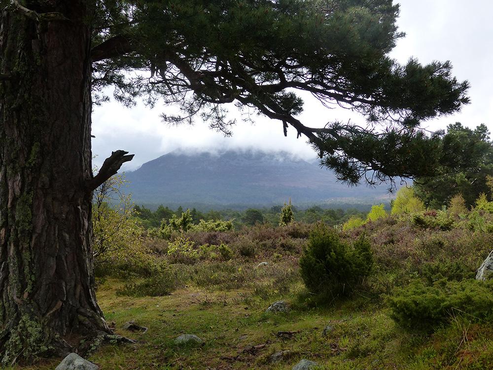 Scotland National Park