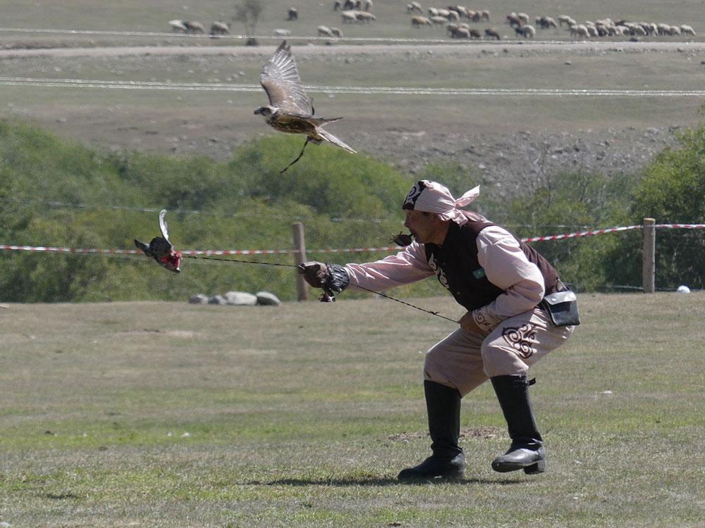 Chasse au faucon au Kirghizistan